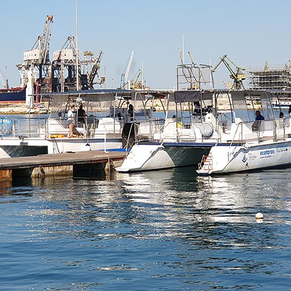 Go4Sea Dolphin Watching nel Golfo di Taranto