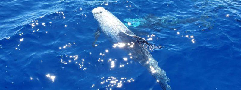 Go4Sea-delfini-taranto-escursione