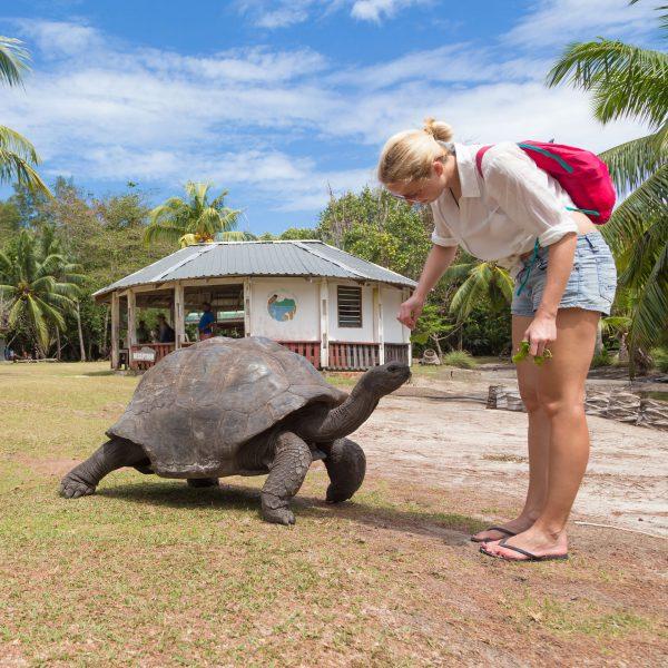 Tartaruga gigante Curieuse Island