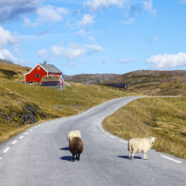 Esperienze da fare: Tour dell'Irlanda in auto