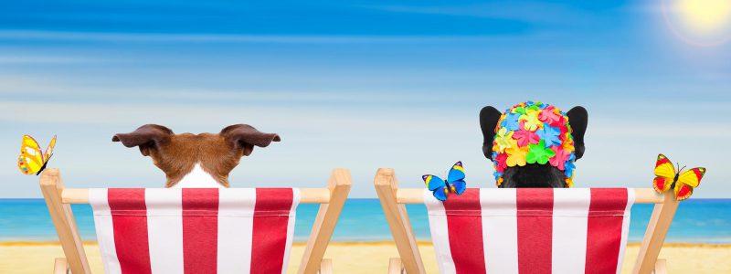 Go4Sea Vacanze a 4 zampe